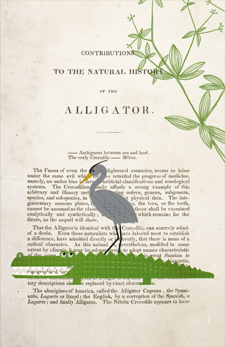 Illustration of alligator and great blue heron